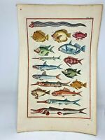 1718 Superbly Hand Colored Fish Print Jonston & Ruysch Engraving #14