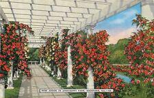Rockford Illinois~Colorful Red Rose Arbor~Sinnissippi Park~Inside Pergola~1940s