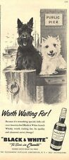 1957 Black & White Scotch Whisky Scotties Public Pier Dennis Morgan ART PRINT AD
