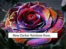 25x Rare Multi-Colors Rainbow Rose Flower Seeds Garden Plant UK Seller