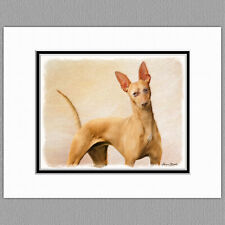 Cirneco dell'Etna Dog Original Art Print 8x10 Matted to 11x14