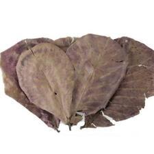 10Stück Seemandelbaumblätter-Filterbeutel für Garnelen, Aquarium Krebse E0C7