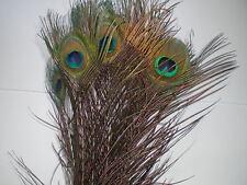 lot de 10 plumes paon  50 cm avec oeil