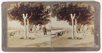 Egitto Route Dei Piramidi 1896, Foto Stereo Vintage Albumina