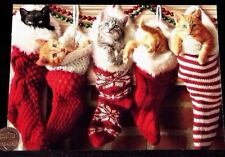 Christmas Kitten Cats Stockings Fireplace Cute - Christmas Greeting Card - New