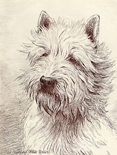 WESTIE WEST HIGHLAND WHITE TERRIER HEAD STUDY OLD SEPIA ART PRINT FROM 1934