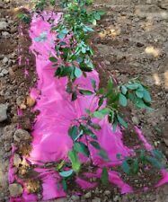 5x250ft Landscape Garden Embossed Plastic Film Strawberry Tomato Weed Barrier
