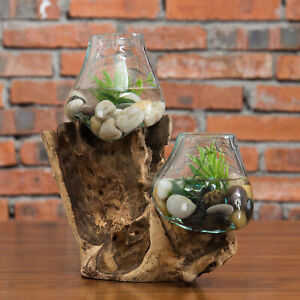 MyGift 2 Clear Handmade Molten Glass Terrarium Bowls with Teak Driftwood Base