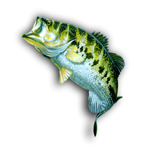 largemouth bass sticker / decal  **Free Shipping**