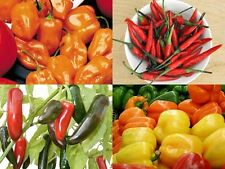 Mixed Fresh Chili Seeds x 20 UK Seller
