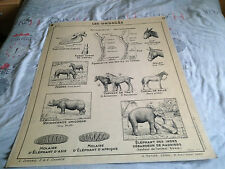 ANCIENNE CARTE SCOLAIRE  HATIER  animaux les ongules / ruminants