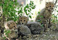 Cross Stitch Chart Cheetah Cubs 3