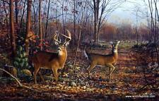 """Scott Zoellick """"Lovers Lane Deer Buck  Art Print  SN with Certificate"""