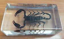 Vintage Black Singapore Scorpion Specimen in Perspex Holder Outstanding Item