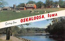VTG 1959 POSTCARD GREETINGS FROM OSKALOOSA COWS FARM BARN RIVER IOWA IA A79