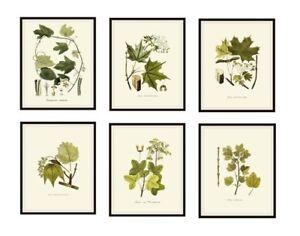 "Set of 6 Vintage Botanical Art Print Poster Reproductions ""Foliage Leaves"" 8x10"""
