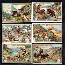 Mountain Animals Card Set Liebig 1909 Alpine Goat Bear Tiger Cattle Deer Chamois