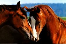 HORSES - TENDERNESS POSTER 24x36 - NATURE 3561