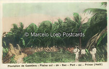 HAITI PLANTATION DE COCOTIERS PLAINE CUL DE SAC PORT AU PRINCE REAL PHOTO COLOR