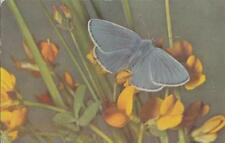 T68.Vintage Postcard.Common blue butterfly.