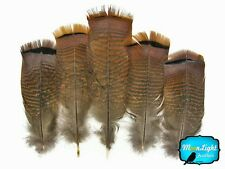 5 Pieces Big Natural Brown Wild Barred Turkey Flat Tail Feathers Smudging Indian