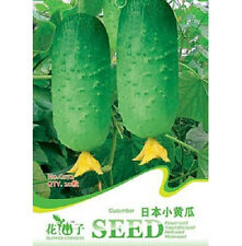 FD1232 Japan Cucumber Seed Cucumis Sativus Organic Vegetable ~1 Pack 20 Seeds~