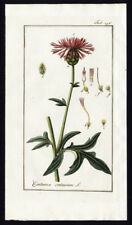 Antique Botanical Print-CENTAUREA SCABIOSA-CENTAURIUM-GREATER KNOTWEED-Zorn-1796