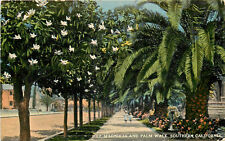 DB Postcard CA C484 Magnolia and Palm Walk Southern California Children Walking