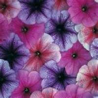 Petunia- Veigned  Mix- 100 Seeds- BOGO 50% off SALE