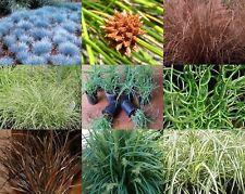 30 Grasses Mixed Garden Plants Native Flax Liriope Mondo Fescue Tussock Lomandra