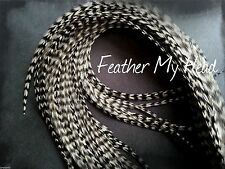 """Super Long 11""""- 14"""" Feather Extension For Hair,  Whiting Eurohackle, Grizzly"""