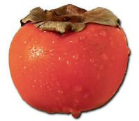 5 PERSIMMON TREE Diospyros Fruit Seeds + Gift & CombS/H