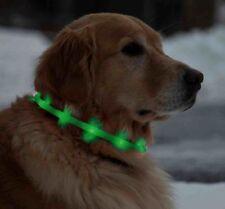 Collari verde per cani
