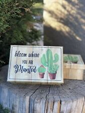 New Cactus Gift Box ~ Birthday Or Any Special Occassion ~ Cute Desert Cacti