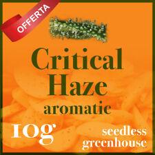 Infiorescenze prima scelta Critical haze 10G