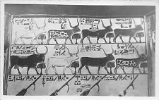 BF36036 the seven cows sacred bull egypt thebes   front/back scan