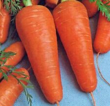 Seeds Carrot Moscow Winter Red Vegetable Organic Heirloom Russian Ukraine