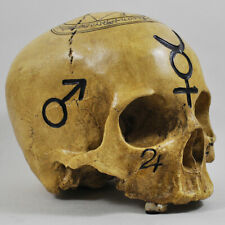 Antique Bone Effect Human Witchcraft Skull Occult Goth Macabre Memento Mori Gift