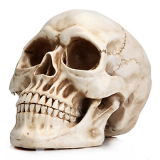 Model Human Skull Head Real Life Size Anatomical Anatomy Bones Tools Gift NEW