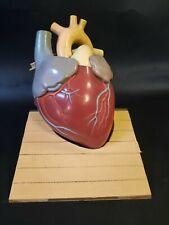 Vintage Heart Anatomical Model