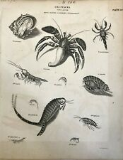 Original 1820 Biology Plate, Crustacea - Order Cancer, complied by Abraham Rees
