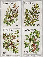 LESOTHO 1979 266-69 Trees Bäume Baumzweige Flora Nature Wild Olive Cape Holy MNH