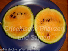 🔥 🍉 Mini-Wassermelone ORANGELO Melone Melonen orange Fucht 6 frische Samen