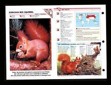 Eurasian Red Squirrel Wildlife Fact File Mammal Animal Card Home School Study