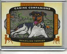 2018 Goodwin Champions Brazilian Terrier *Canine Companions* Patch #Cc108