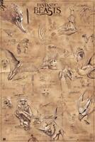 Fantastic Beasts Poster Tierwesen 61 x 91,5 cm Plakat Wandbild Wanddeko Deko