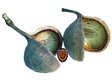 2x Buddha Nut, ca.10-12cm, Terrariumdeko,
