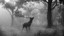 Black And White Stag Deer - Forest Wild Animal Art Large Canvas Picture 20x30""