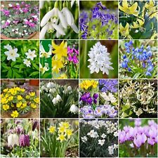 "Woodland Bulb Varieties ""Spring Flowering"" Bulbs Corms Roots Rhizomes Perennials"