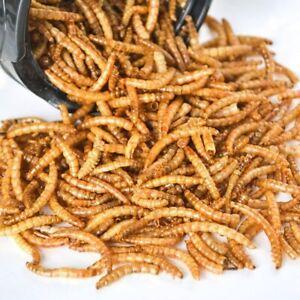 Freeze Dried Mealworm ants fish bait birds pet food farm supplies treats